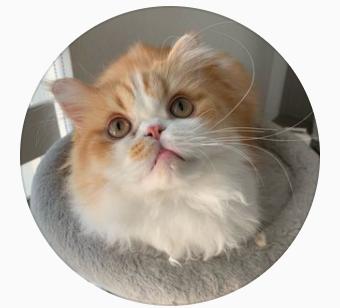 creamythefluffycat